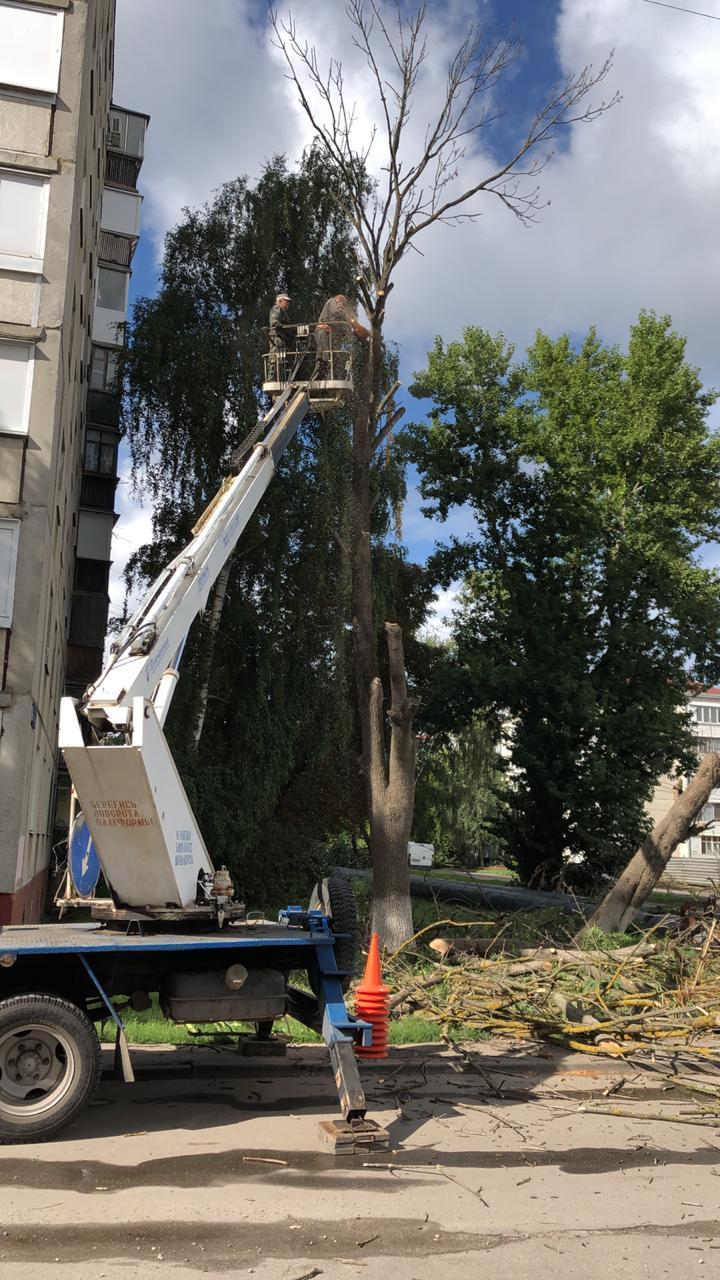 СРС завершила опил деревьев